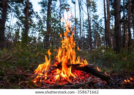 Tourist bonfire in the woods - stock photo