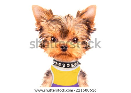 tourist dog isolated on a white background - stock photo