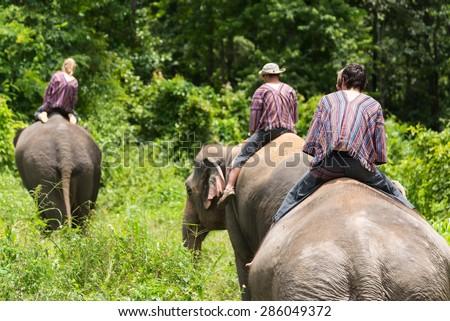 Tourist ride asian elephants trekking through jungle in northern Chiang Mai, Thailand. - stock photo