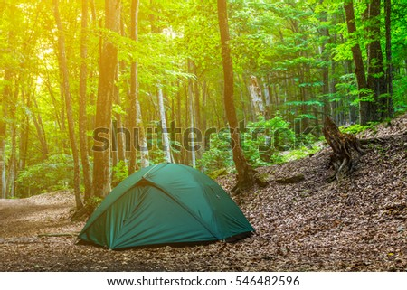 touristic camp in a summer forest