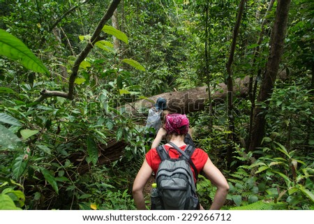 Tourists hiking in the deep jungle of the Khao Yai national park in Thailand deep jungle - stock photo