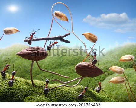 tournament ants on birds, ant tales - stock photo