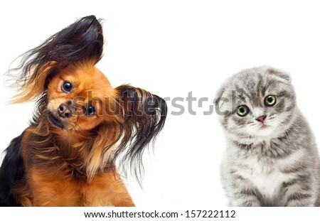 Toy terrier dog and a cat on a white background. - stock photo