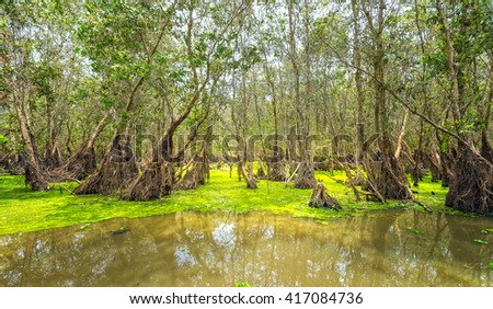 Tra Su forests typical of wetland ecosystems of mangroves, it rich flora and fauna resources to feed people in area but preserved untouched beauty where eco tourism for everyone - stock photo