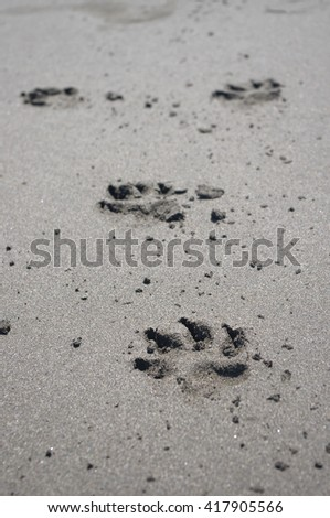 Trace in sand, of a dog - stock photo