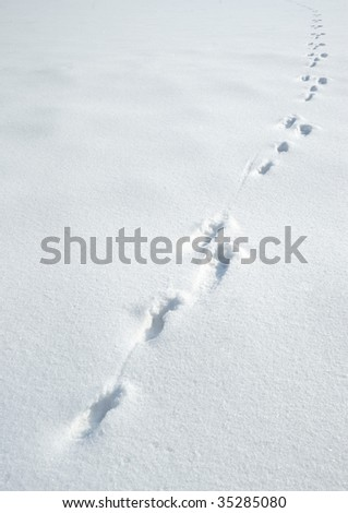 Traces of a hare on a snow. A print of paws on a winter floor - stock photo