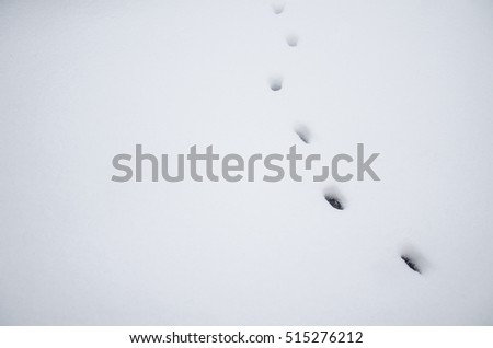 traces of cat animal snow, background for inscriptions