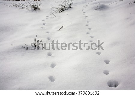 Traces of wild animals and shadows on snow - stock photo