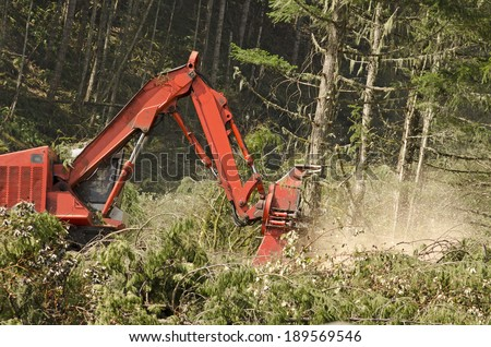 Track mounted forestry feller buncher cutting down down conifer fir trees logs at a logging unit site in Oregon - stock photo
