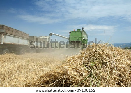 Tractor and combine harvesting. Sunny summer day