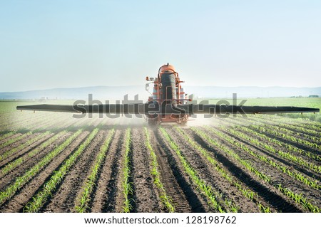 Tractor fertilizes crops corn in spring - stock photo
