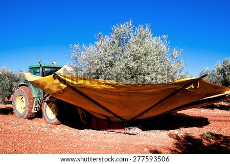 Tractor harvesting black olives at agricultural plant. Andalusia, Spain  - stock photo