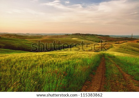 Tractor lines in a green field