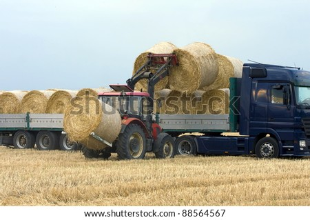 Tractor loading hay on the cargo truck. - stock photo