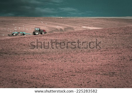 Tractor plows a field in the spring accompanied by rooks  - stock photo