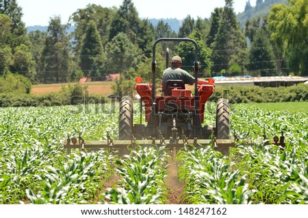 Tractor pulling a spring harrow to control weeds in a new growth corn field - stock photo