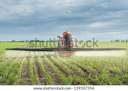 Tractor spraying corn in the spring