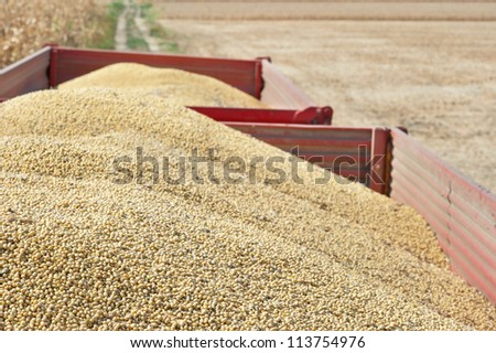 Tractor trailer with soy bean after harvest in field - stock photo
