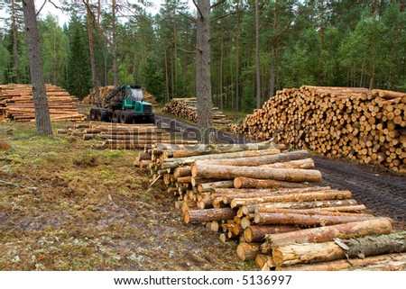 Tractor works in forest with lumbers, first part of timber business - stock photo