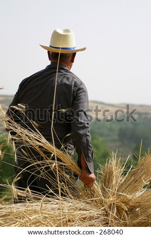 Traditional agriculture work - stock photo