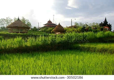 Traditional buildings and rice fields in the famous coffee growing region of Bali, Kiadan Pelaga, Bali, Indonesia.