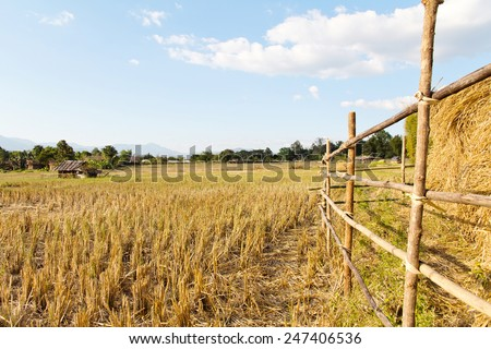 Traditional farming.Rural field after the rice harvest at pai district, Mae Hong Son Province,Thailand. - stock photo