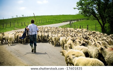 Traditional farming. Shepherd and sheep herd - stock photo