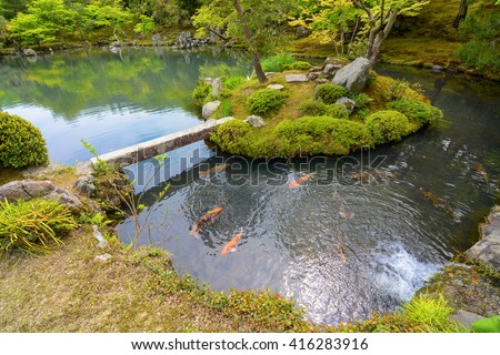 David carillet 39 s portfolio on shutterstock for Golden ornamental pond fish crossword