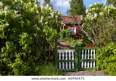 Traditional red wooden house in Sweden behind blooming lilac in spring. - stock photo