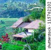 Traditional Village with Rice Field in Jungle in the Heart of Bali Island, Indonesia - stock photo