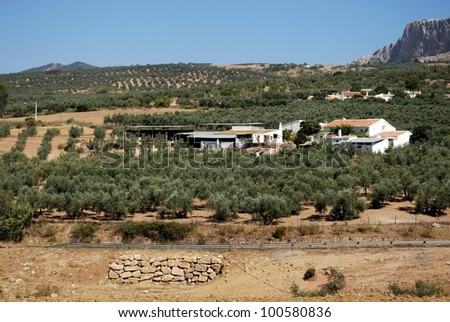 Traditional whitewashed farms set in olive groves, Near Almogia, Costa del Sol, Malaga Province, Andalusia, Spain, Western Europe. - stock photo