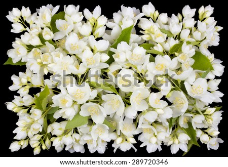 Tragic square funeral buttonhole from white  jasmine flowers. Isolated on black