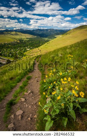 Trail and flowers on Mount Sentinel, in Missoula, Montana. - stock photo