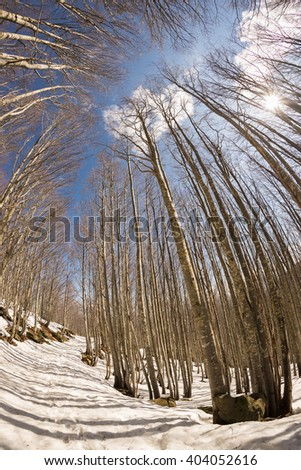 Trail crossing beech tree woodland with melting snow on ground. Blue sky in spring season, scenic fisheye distortion. - stock photo
