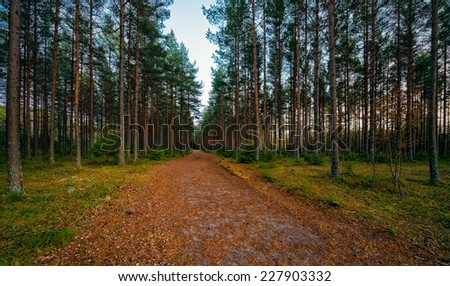 Trail for recreation during evening in the woods, Sweden - stock photo