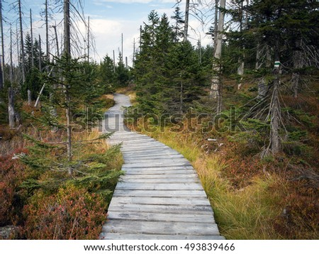 Trail in Karkonosze Mountains, Poland