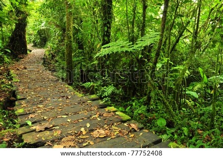 Trail in Monteverde Reserve, Costa Rica - stock photo