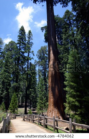Trail in Sequoia National Park - stock photo
