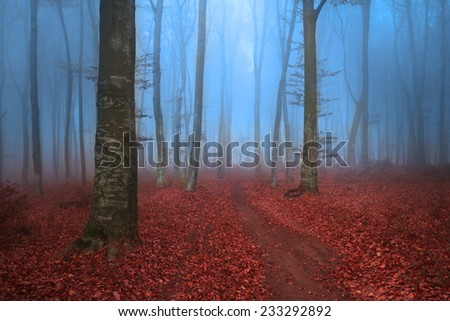 Trail in the forest with blue mist - stock photo