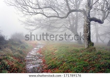 trail in the forest with fog and mysterious trees - stock photo