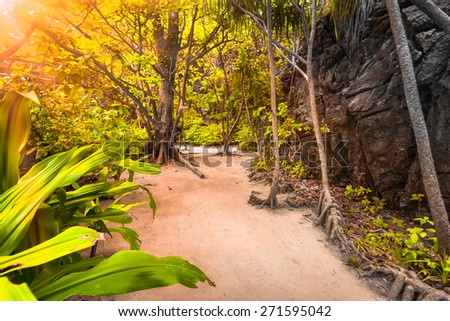 Trail in the jungles of the island of Ko Phi Phi Lei in Thailand - stock photo