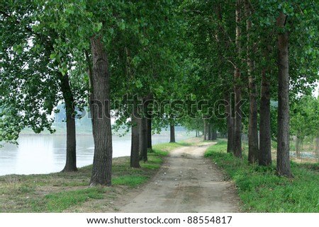 trail in the park, trees by the trail, north china. - stock photo