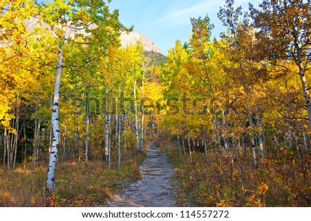 trail leading through the bright colorful autumn forest with a bright blue sky in the morning - stock photo