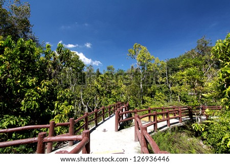 Trail on nature at krabi province, Thailand