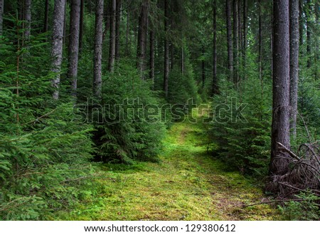 Trail overgrown with moss in a mountain forest of Carpathians - stock photo