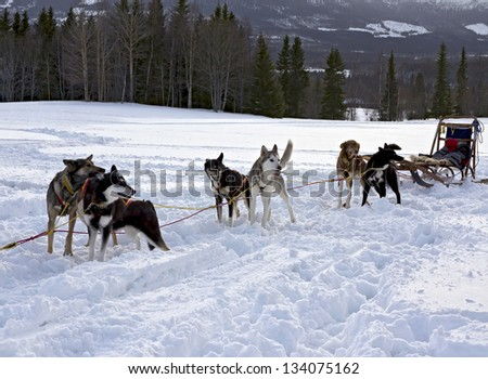 Trail Sled Dog Race in Sweden - stock photo