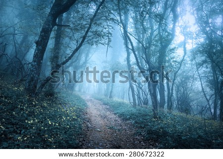 Trail through a mysterious dark forest in fog with green leaves and flowers. Spring morning in Crimea. Magical atmosphere. Fairytale - stock photo