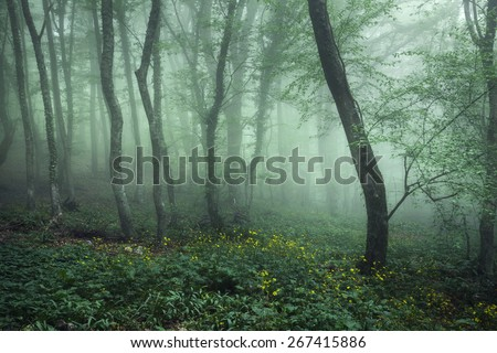 Trail through a mysterious dark forest in fog with green leaves and yellow flowers. Spring morning in Crimea. Magical atmosphere. Fairytale - stock photo