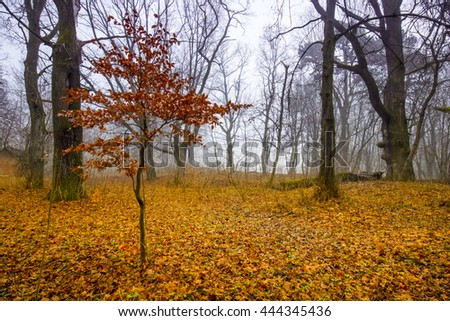 Trail through a mysterious dark old forest in fog. Autumn morning