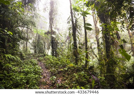 Trail through cloud forest in the Andean jungle - stock photo